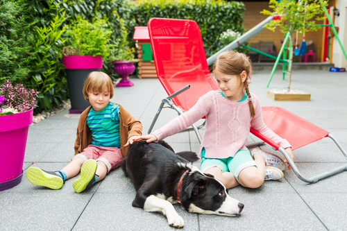 Kids and Dog on Pation